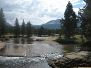 A Typical Scene in Tuolumne Meadows